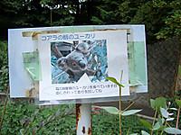 Cimg9719_2